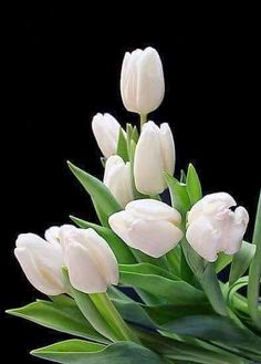お花が大好きさん – Communauté – Google+
