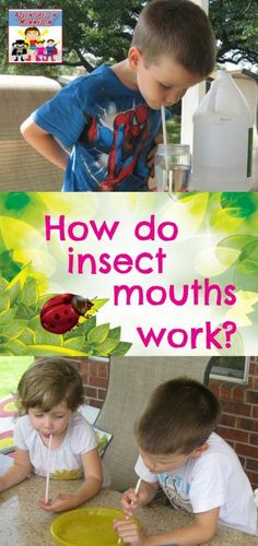 How do insects eat? How do insect mouths work? How do insects eat? How do insect mouths work? Preschool Science, Preschool Classroom, Science For Kids, Science Activities, Biology For Kids, Conquistador, Insects For Kids, Insect Crafts, Bug Crafts