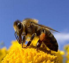 Happ-Bee Weekend (by Licht----)