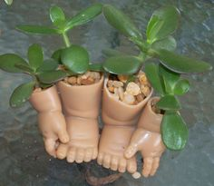 Jaded toes, succulents growing in recycled doll parts.                                                                                                                                                                                 More