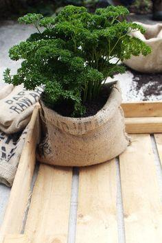 Coffee bag planter pots #gardening