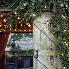 Globe lights draped and hung through vine plants