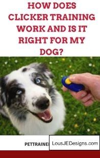 How To Train An Older Dog To Stop Biting And Pics Of How To Train