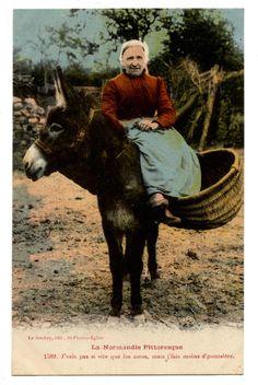 ÂNE Bourricot Baudet Donkey Mulet Panier Osier | eBay