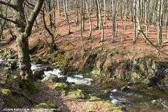 Grassguards Gill, Seathwaite, Duddon Valley, Cumbria