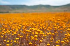 7 of the Best #Places to See #Spring #Flowers in #SouthAfrica @Travelstart