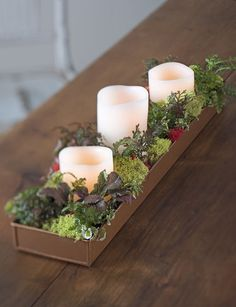 At deep and wide, our copper-coated plant tray helps you create a windowsill dish garden or centerpiece with succulents and other small plants. Indoor Succulent Planter, Succulent Gardening, Garden Planters, Succulents Garden, Indoor Garden, Succulent Care, Glass Garden, Blooming Succulents, Fairy Gardening