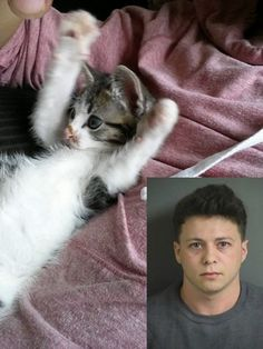 Maximum Penalty for Leo A. Napoulos For Abusing A 8-week-old Kitten! Help Fritz Get Justice!