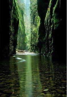 Fern Canyon California