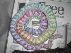 lavender corn snake <3                                                       …