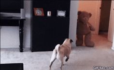 Running scared at the speed of lightning. Yep that's my pug.