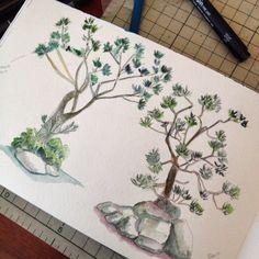 Uma rvore japonesa que eu esqueci o nome I forgot the name of this Japanese tree dwgdaily watercolor