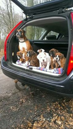Aww, so sweet. Taking the family out for a drive to get socialized.