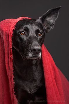 """All the better to hear you with, my dear!"" by Elke Vogelsang on 500px"
