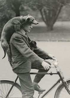 51 Ideas dogs black and white photography vintage photos I Love Dogs, Puppy Love, The Zoo, Man And Dog, Tier Fotos, Dog Photos, Animals Photos, Funny Photos, Vintage Photographs