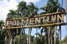 De heerlijk rustige Palmentuin, midden in Paramaribo, Suriname