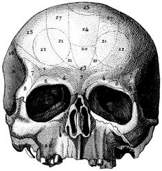 The human skull, Old medical atlas illustration Digital Image, 33. $8.88, via Etsy.
