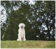 Dog portrait. Dog Portraits, Labrador Retriever, Pets, Gallery, Animals, Labrador Retrievers, Animales, Roof Rack, Animaux
