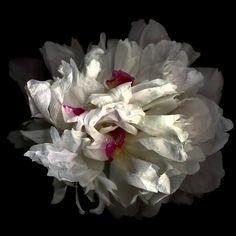 """Raspberry swirl of a different kind"" by Magda indigo"