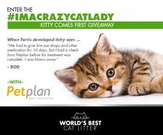 """Love @bestcatlitter? Enter to win a 3-month supply PLUS 1 year of pet insurance from Petplan in the """"Kitty Comes First Giveaway""""!"""