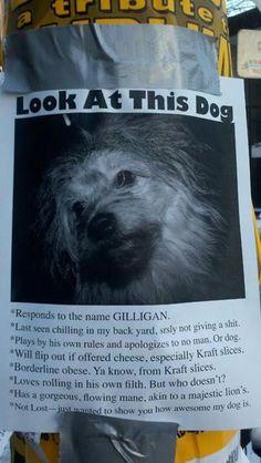 Lost Dog. . .