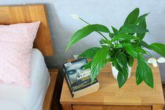 rośliny oczyszczające powietrze z toksyn