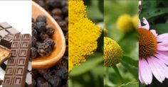 Top 6 Non-Marijuana Plants That Contain Cannabinoids!