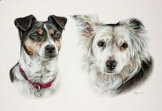 Pencil Portrait Mastery - Like most Border Collies, 13 year-old Lass (right) is good-natured and very intelligent. She's a strong swimmer, who loves walks and obsessively chasing her ball. Lass (left) is a 10 year-old Jack Russell/Yorkshire Terrier cross, with the Terrier's typical hunting instinct, agility, and ability to escape – the birds have learned to leave the garden when she gets out! Discover The Secrets Of Drawing Realistic Pencil Portraits