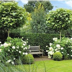 Garden topiaries, hydrangea, boxwood