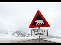"Signs warning of Polar Bears, like this one seen in Longyearbyen, are posted all throughout Svalbard, Norway. ""Gjeder hele Svalbard"" means ""Applies to all of Svalbard."" The threat of Polar Bear attacks is so great, that Svalbard's residents are required to carry guns whenever they leave their houses."