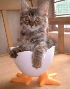 Katze in Eierbecher