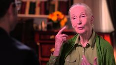 ...because it's funny believe it or not....Last Week Tonight with John Oliver: Dr. Jane Goodall Interview (HBO)