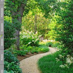 Lush walkway in back yard. Yes please.