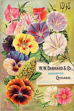 A great find for my garden shed! - the front & back cover of a mailorder seed catalogue ~ Source: Smithsonian Librairies