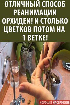 Garden, Orchids, Plants, Diy Garden, My Flower, House Plants, Flora