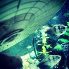 New photo online J.J. Enterprise hides underwater. #startrek #eaglemoss #water Hope you like it