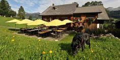 Gade Lodge Dogs, Animals, Switzerland, Animales, Animaux, Animal Memes, Animal, Pet Dogs, Dog