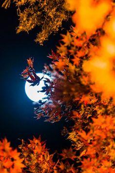 .~Autumn°°
