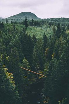 Tillimook National Forest, Oregon