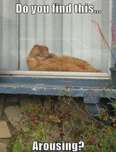 Sex kitten.