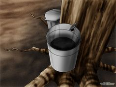 Part Two How To Tap Maple Trees Photo Tutorial In