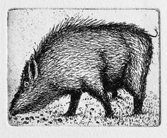 A Boar in Clover - etching - Tim Southall