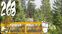 Bigfoot Hotspot Radio // SC EP:268 Strange chatter in the woods
