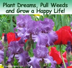 Favorite Gardening Quotes for the New Year | Your Easy Garden