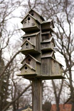 This one is for the birds. Bird Houses, Bird House Feeder, Bird Feeders, Purple Martin House, Art And Hobby, Bird Cage, Nest, Love Birds, Little Houses