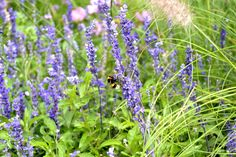 Bumble Bee Bee, Plants, Plant, Planting, Planets