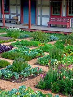 mixed planting: veg, herbs and flowers.