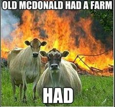 We have collected few very funny animals memes, we hope you will enjoy them a lot, feel free to share the best one's with your friends and keep enjoy.Read This Top 26 Animals Humor memes Funny Animal Memes, Funny Animal Pictures, Funny Photos, Funny Animals, Funny Memes, Meme Pics, Farm Animals, Funny Sayings, Cow Pictures