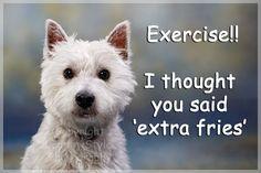 Westie West Highland White Terrier Dog Funny Fridge Magnet Gift