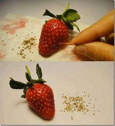 regrow strawberries, seriously I shall try this. Only from strawberries from the Farmer's Market though :)